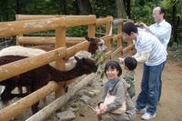 20101011-2_alpaca.jpg