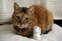 20110210-1_hawaii-cat.jpg