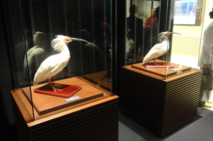 http://tamionet.com/blog/image/20120323-1_toki.jpg
