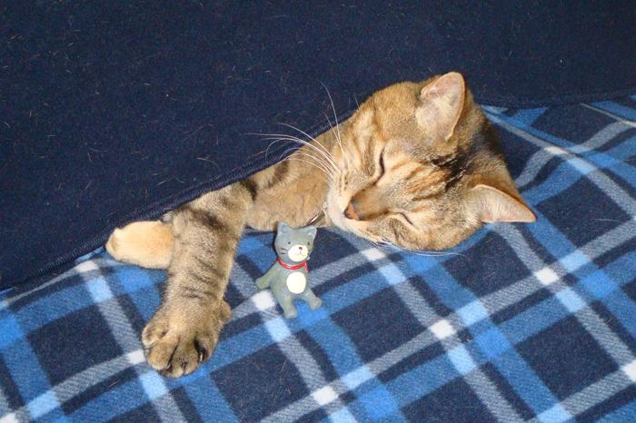 http://tamionet.com/blog/image/20120513-1_kuma-neko.jpg