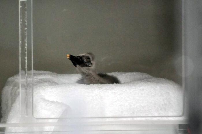http://tamionet.com/blog/image/20120515-2_hitachinomiya.jpg