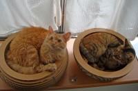 20130901igo-cat-1