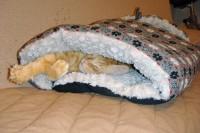 猫布団で爆睡中のアポロ