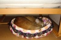 手作りの猫ベッドでくつろぐマロン