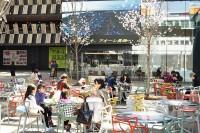 ナカドマの桜と市民