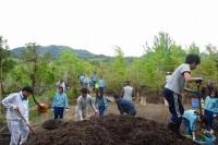 中学生は植樹作業
