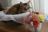 花をめでるマロン