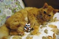 アポロと招き猫